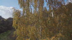AERIAL: flying over autumn tree above the foggy valley Stock Footage