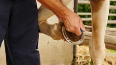 A farrier works on the hoof of a percheron draft horse. Stock Footage