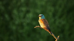 Beautiful bird in nature Stock Footage