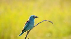 Gorgeous bird in nature Stock Footage