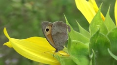 Butterfly on Flower Stock Footage
