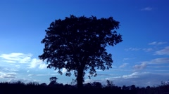 Attractive single solitary Oak tree - nature backgrounds Stock Footage