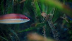 Colorful fishes Stock Footage