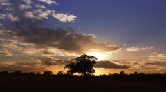 Scenic landscape of sunset trees blue sky clouds Timelapse Nature Backgrounds Stock Footage