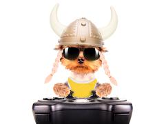 Dog dressed up as a viking play on game pad Stock Photos
