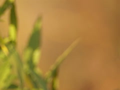 Nature, goldenrod flowers Stock Footage