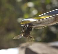 honey in a spoon and a bee - stock photo
