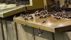 Bees at the hive entrance Stock Footage