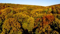 Wild balkan forest in autumn colors Stock Footage