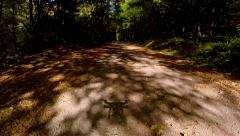Flying over a path through the woods Stock Footage