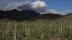 4K Saguaro Cactus Cloud Shadows Arizona Desert Landscape Time Lapse Stock Footage