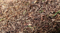Ants in an anthill Stock Footage