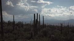 4K Summer Rain Shower Wets Arizona Desert Saguaro Cactus Stock Footage