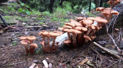 4k Wood and Tree Fungi panning at cutted tree trunk Stock Footage