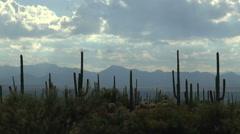 Sweeping Sun Rays Arizona Cactus Desert Landscape Time Lapse Stock Footage