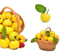 ripe quince in the basket - stock photo