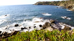 Wide angle view of coastline in Sardinia, Italy, with succulent plants. Stock Footage