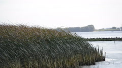 Reeds on the River Elbe - stock footage