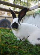 Rabbit cage Kuvituskuvat