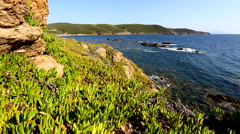 Wide angle view of sardinian coastline from the top, with green succulent plant. Stock Footage