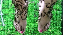 Garra Rufa fishes cleans epidermis from woman feet Stock Footage