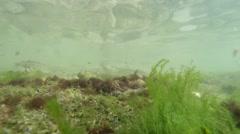 Seaweed and rocks shallow water sea Stock Footage