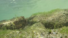 Glare of the sun reflected on the bottom of shallow water on the rocks and algae Stock Footage