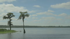 Spanish moss on lakeside cypress Stock Footage