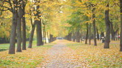 Autumn linden alley in town, with beautiful bokeh Stock Footage