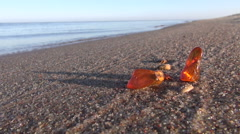 Beautiful natural amber pieces on sea morning beach sand Stock Footage