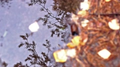 Pine reflection in ruddle Stock Footage