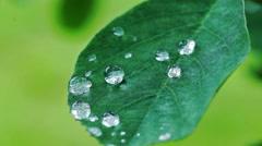 Raindrops on green leaf Stock Footage