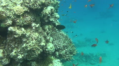 Colorful fishes on reef 27 dahab Stock Footage
