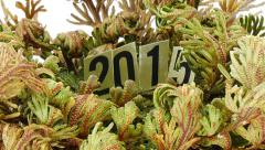 Opening Rotating Rose of Jericho with Year-2015 sign Stock Footage