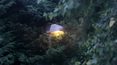 Lamppost among the trees 2 Stock Footage