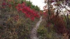 Picturesque view of path in the mountain forest Stock Footage