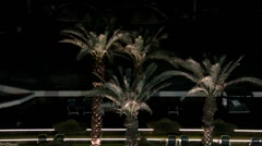 Date palms at night Stock Footage