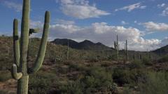 4K Saguaro Cactus Sunny Day Arizona Desert Landscape Time Lapse Stock Footage
