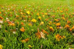 fall leaves on the green grass. - stock photo