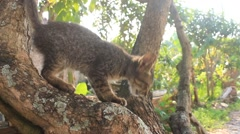 Cat climbed the tree Stock Footage