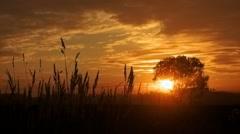 Sunrise and tree - stock footage