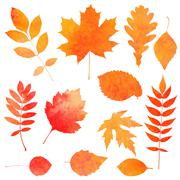 watercolor collection of beautiful orange autumn leaves isolated on white bac - stock illustration