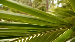 Closeup Leaves of Coconut Palm Tree in Sunlight. Stock Footage