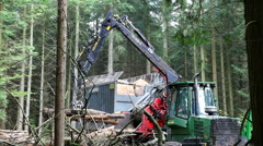 Loading the large logs into the wood chipper Stock Footage