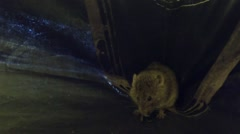 Mouse at the bottom of the tent was afraid that he was found Stock Footage