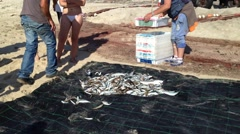Fishermen separate the fish for later sale. Stock Footage