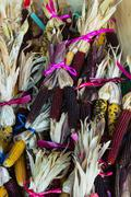 Colorful Indian corn in a farmers market Stock Photos