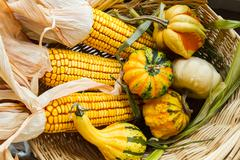 Autumn corn and gourds - stock photo