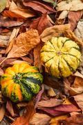 Gourds on Autumn leaves - stock photo