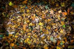 Leaves, a background with vignette Stock Photos